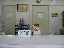 上島動物病院(かみじまどうぶつびょういん)