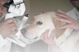 獣医師について
